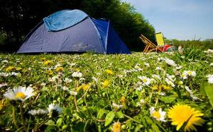 camping field full of daisys and dandelions Breck Farm Campsite near Weybourne, Norfolk, UK. ©Naki Kouyioumtzis/ Axiom.